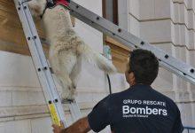 El Consorci de Bombers formalitzarà en 2020 la seua Secció Canina per a Rescats